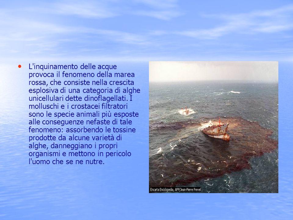 L inquinamento delle acque provoca il fenomeno della marea rossa, che consiste nella crescita esplosiva di una categoria di alghe unicellulari dette dinoflagellati.