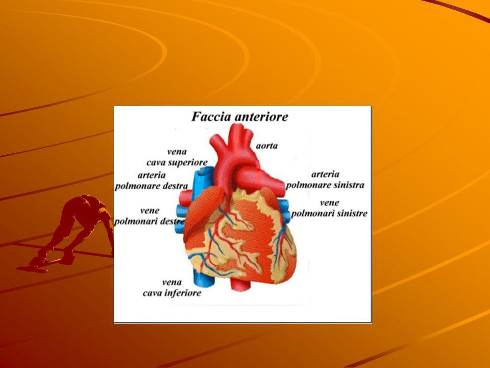La placca determina ispessimento delle pareti e perdita di elasticità dellarteria, con ostacolo del flusso di sangue e riduzione dellossigenazione dei