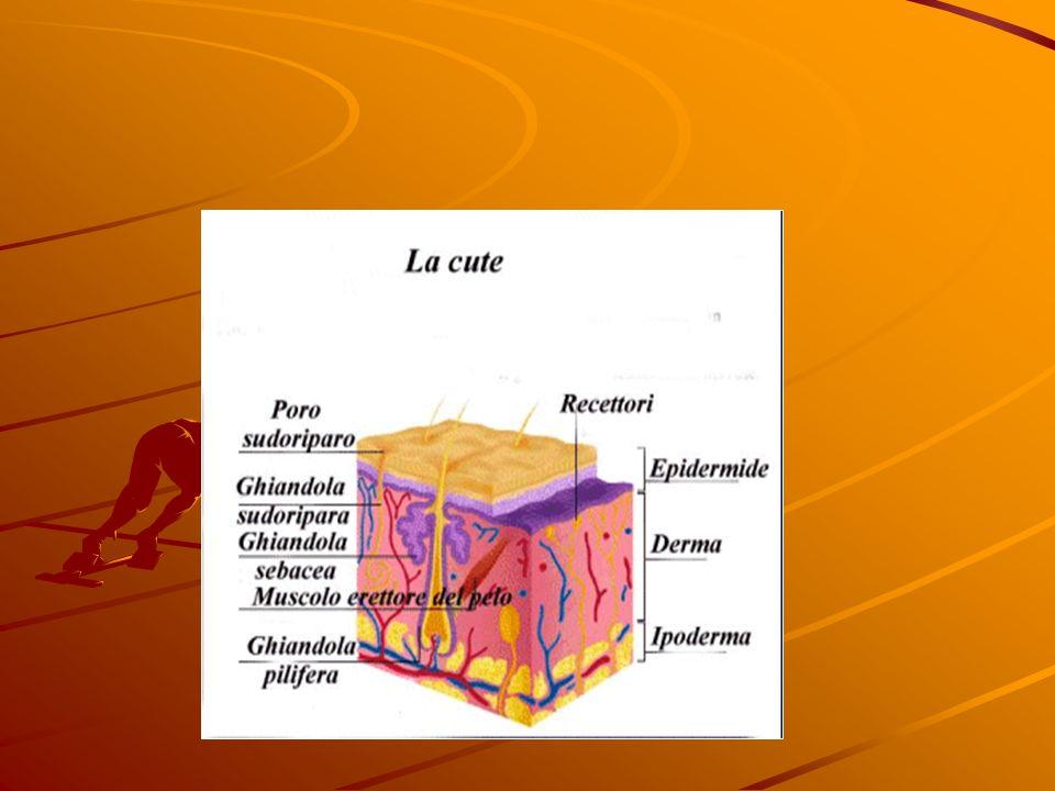 COSA E UNA USTIONE ? Un ustione è un danno della cute o dei tessuti sotto- stanti causato dal contatto con una fonte di calore o da una corrente elett