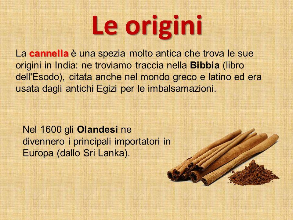 Le origini cannella La cannella è una spezia molto antica che trova le sue origini in India: ne troviamo traccia nella Bibbia (libro dell'Esodo), cita