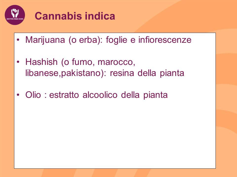 Cannabis indica Marijuana (o erba): foglie e infiorescenze Hashish (o fumo, marocco, libanese,pakistano): resina della pianta Olio : estratto alcoolico della pianta