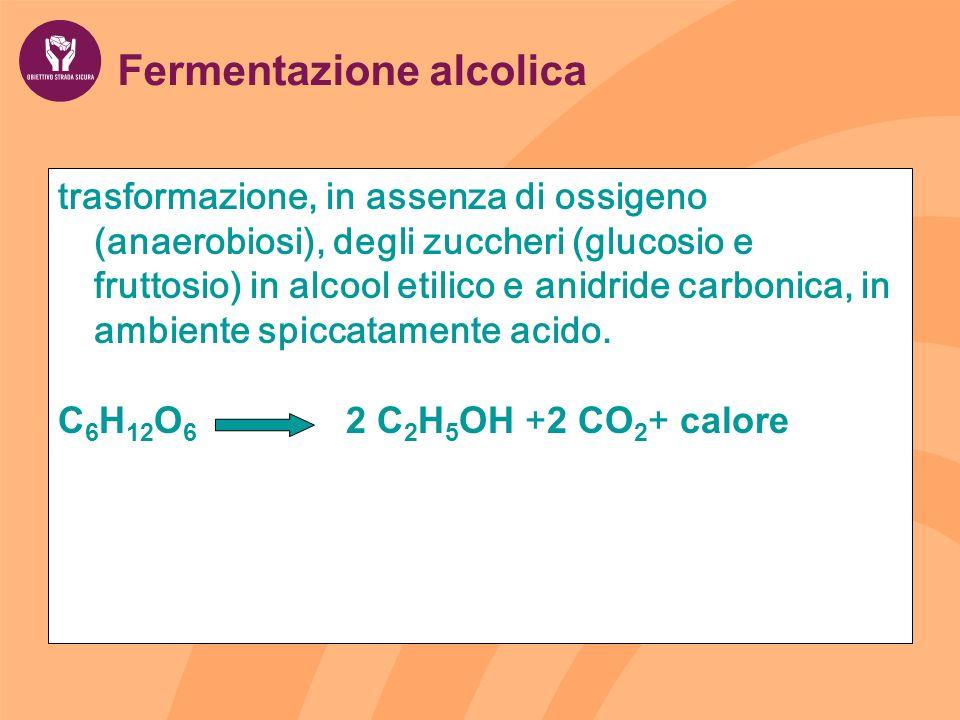 Fermentazione alcolica trasformazione, in assenza di ossigeno (anaerobiosi), degli zuccheri (glucosio e fruttosio) in alcool etilico e anidride carbon