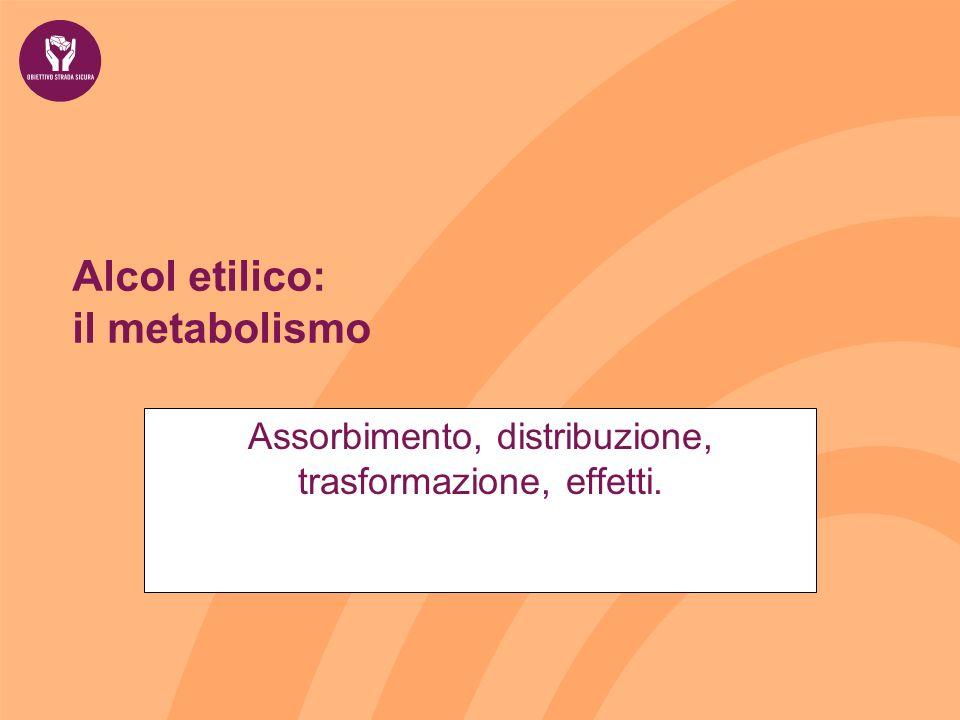 Alcol etilico: il metabolismo Assorbimento, distribuzione, trasformazione, effetti.