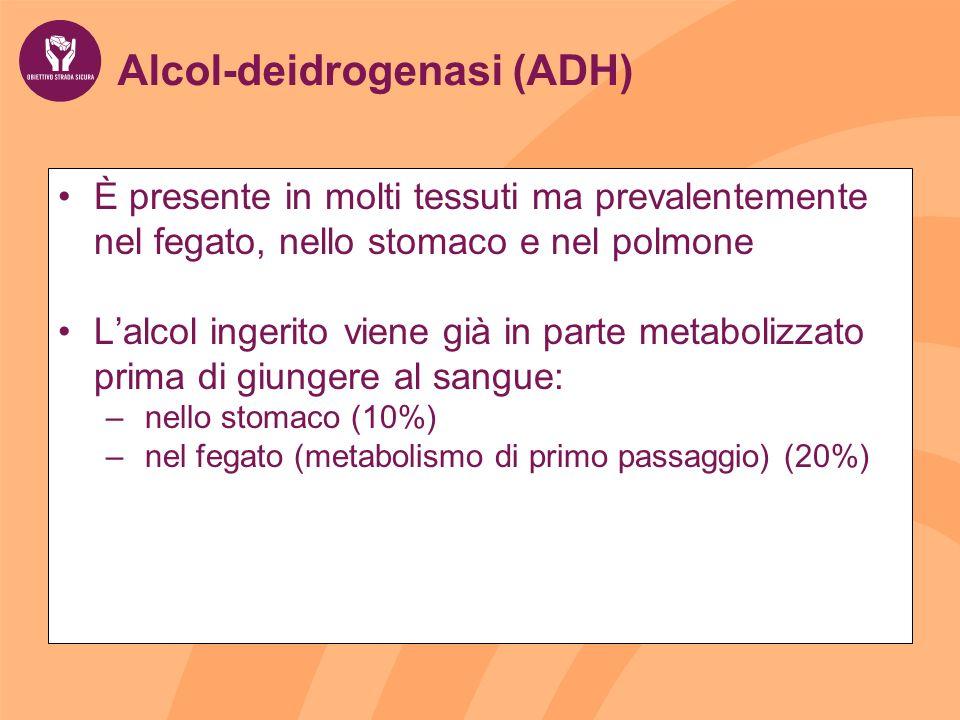 Alcol-deidrogenasi (ADH) È presente in molti tessuti ma prevalentemente nel fegato, nello stomaco e nel polmone Lalcol ingerito viene già in parte metabolizzato prima di giungere al sangue: – nello stomaco (10%) – nel fegato (metabolismo di primo passaggio) (20%)