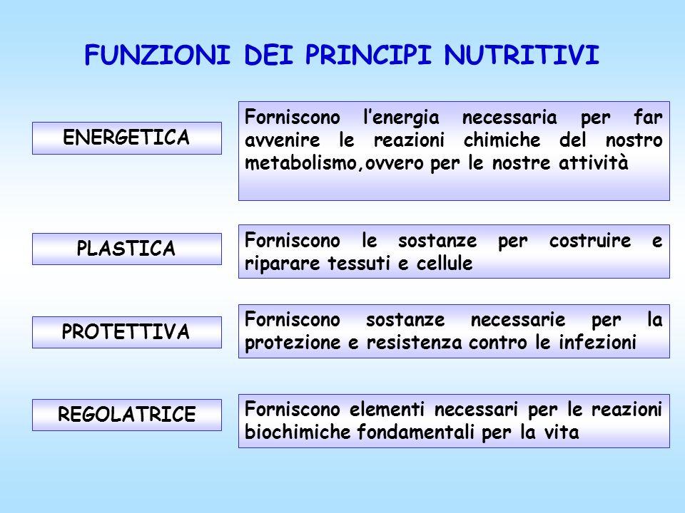 FUNZIONI DEI PRINCIPI NUTRITIVI PROTETTIVA Forniscono sostanze necessarie per la protezione e resistenza contro le infezioni PLASTICA Forniscono le so