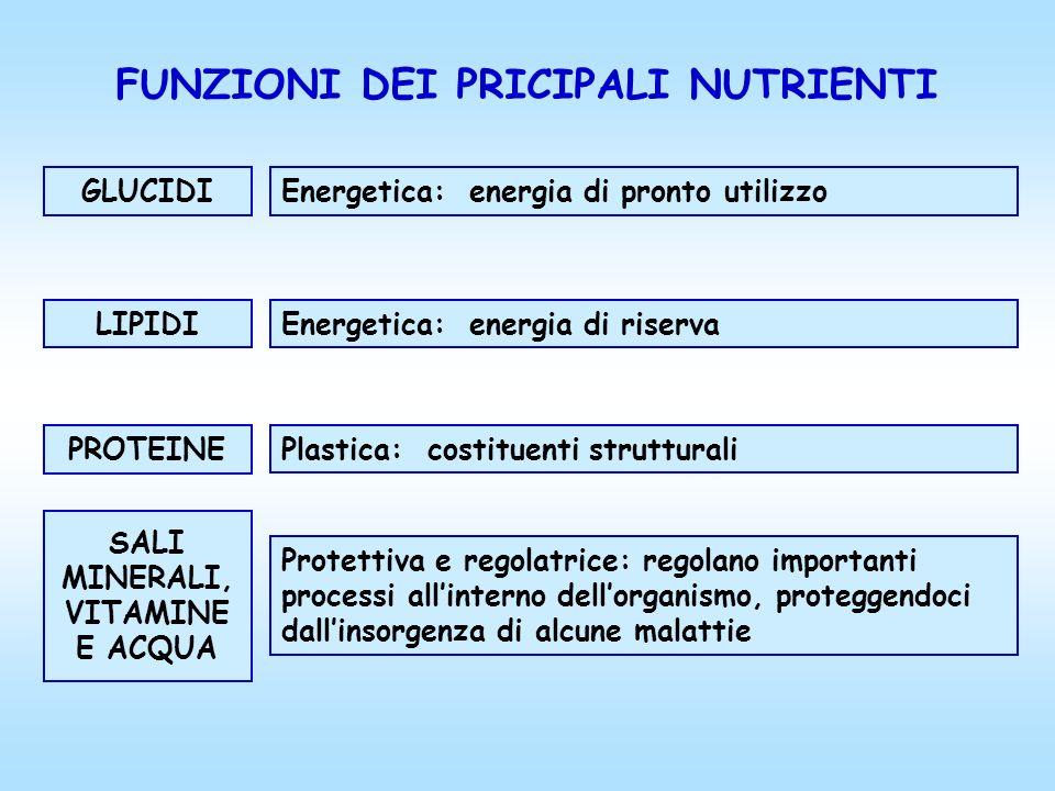 FUNZIONI DEI PRICIPALI NUTRIENTI PROTEINE Plastica: costituenti strutturali GLUCIDI Energetica: energia di pronto utilizzo LIPIDI Energetica: energia