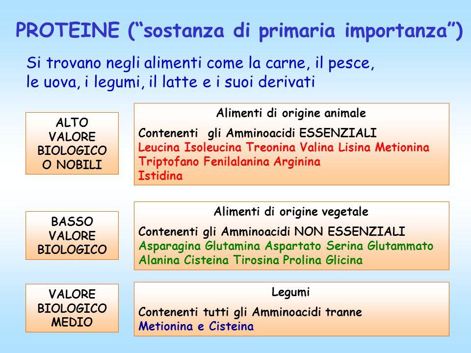 PROTEINE (sostanza di primaria importanza) BASSO VALORE BIOLOGICO Alimenti di origine vegetale Contenenti gli Amminoacidi NON ESSENZIALI Asparagina Gl