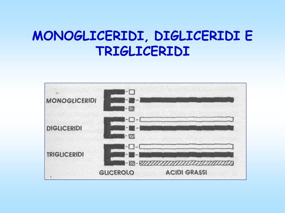 MONOGLICERIDI, DIGLICERIDI E TRIGLICERIDI