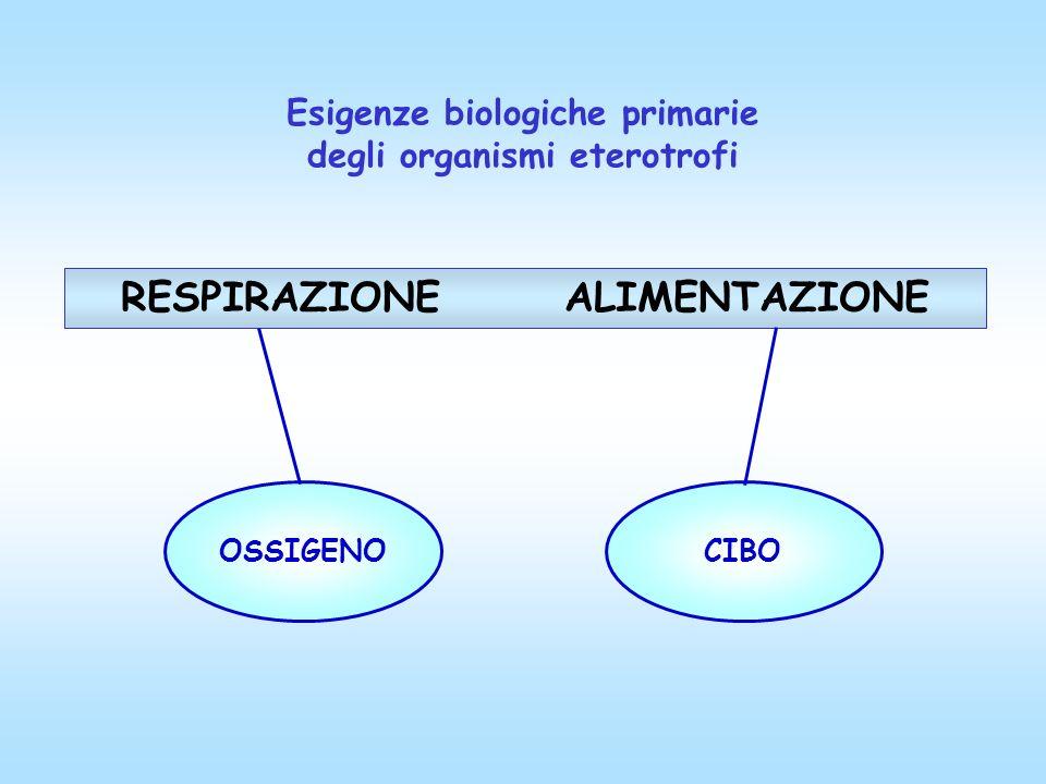 Esigenze biologiche primarie degli organismi eterotrofi RESPIRAZIONE ALIMENTAZIONE OSSIGENO CIBO