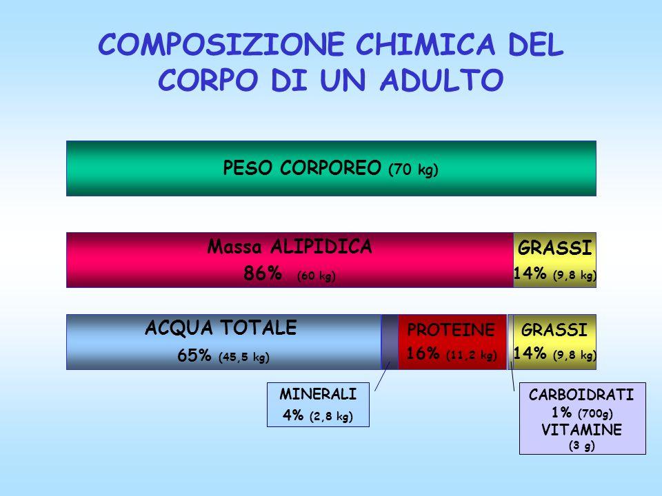 COMPOSIZIONE CHIMICA DEL CORPO DI UN ADULTO PESO CORPOREO (70 kg) Massa ALIPIDICA 86% (60 kg) GRASSI 14% (9,8 kg) ACQUA TOTALE 65% (45,5 kg) PROTEINE