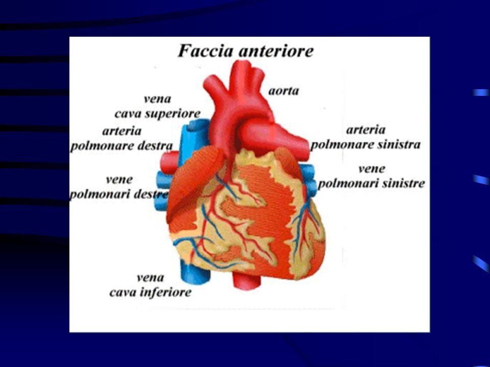 Caratteristiche del dolore toracico cardiaco sede del dolore: retrosternale, stomaco irradiazione: gola, mandibola, spalla sinistra, braccio sinistro,