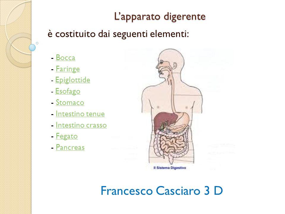 Intestino crasso Menù L intestino crasso è l ultima parte dell apparato digerente dove, attraverso l intestino retto, le sostanze di rifiuto vengono espulse tramite le feci.