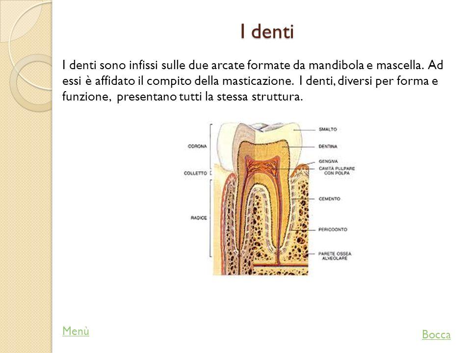 La faringe Il cibo dopo essere stato trasformato in bolo alimentare, viene spinto dalla lingua nella faringe, che è una cavità situata nella parte posteriore della bocca, che comunica con l esofago e la laringe.