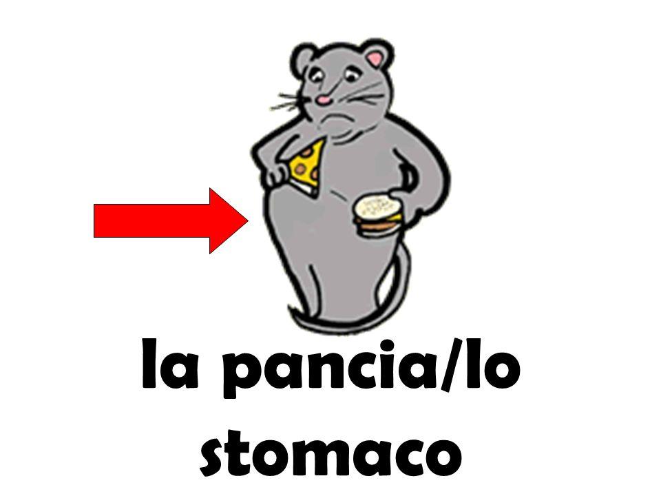 la pancia/lo stomaco