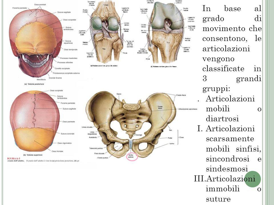 In base al grado di movimento che consentono, le articolazioni vengono classificate in 3 grandi gruppi: I.Articolazioni mobili o diartrosi II.Articola