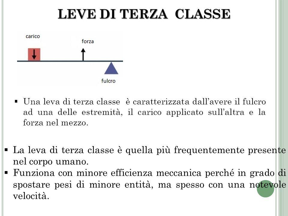 LEVE DI TERZA CLASSE Una leva di terza classe è caratterizzata dallavere il fulcro ad una delle estremità, il carico applicato sullaltra e la forza ne