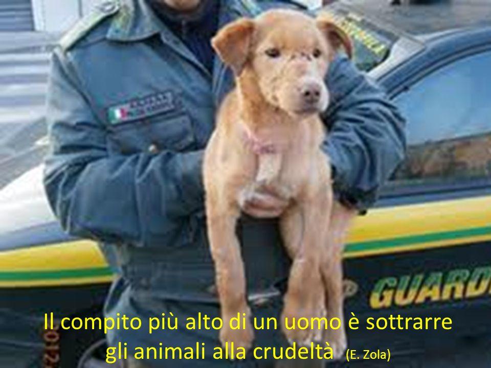 Il compito più alto di un uomo è sottrarre gli animali alla crudeltà (E. Zola)