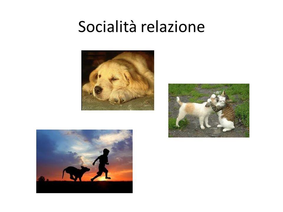 Socialità relazione