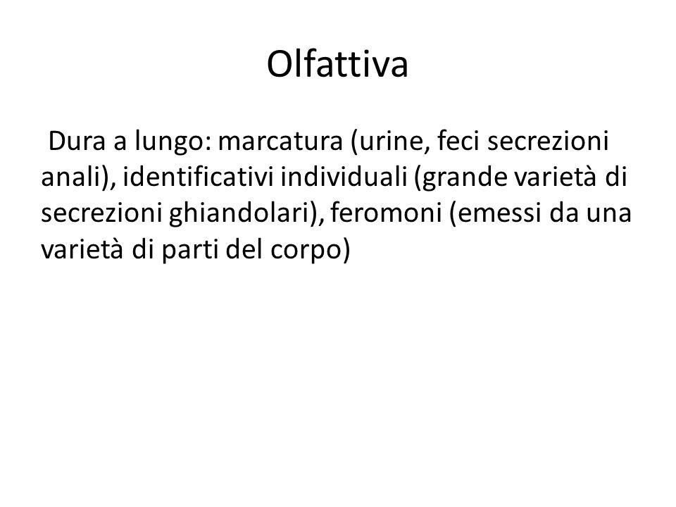 Olfattiva Dura a lungo: marcatura (urine, feci secrezioni anali), identificativi individuali (grande varietà di secrezioni ghiandolari), feromoni (emessi da una varietà di parti del corpo)