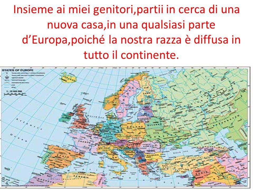 Insieme ai miei genitori,partii in cerca di una nuova casa,in una qualsiasi parte dEuropa,poiché la nostra razza è diffusa in tutto il continente.