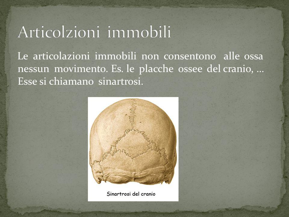 Le articolazioni immobili non consentono alle ossa nessun movimento. Es. le placche ossee del cranio, … Esse si chiamano sinartrosi.
