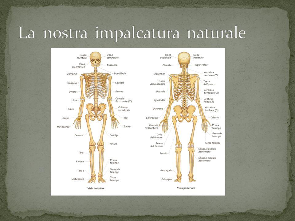 In natura non esiste solo lo scheletro come il nostro (interno) ma anche esterno.