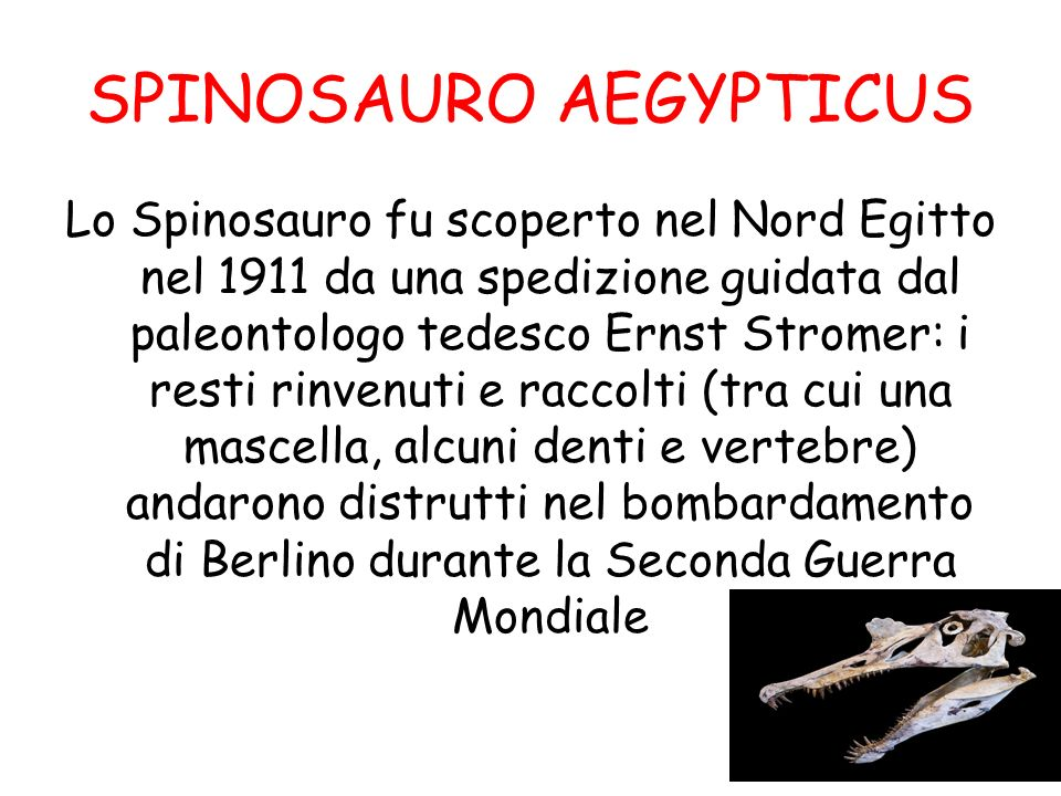 SPINOSAURO AEGYPTICUS Lo Spinosauro fu scoperto nel Nord Egitto nel 1911 da una spedizione guidata dal paleontologo tedesco Ernst Stromer: i resti rin