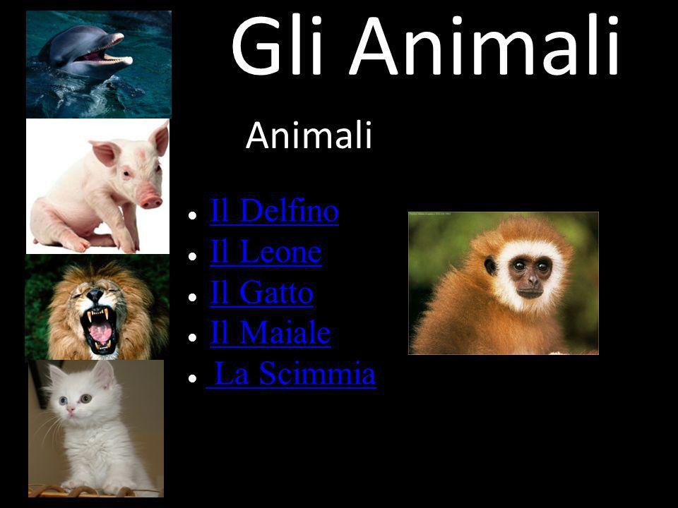 Gli Animali Animali Il Delfino Il Leone Il Gatto Il Maiale La Scimmia
