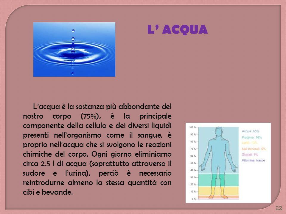 Lacqua è la sostanza più abbondante del nostro corpo (75%), è la principale componente della cellula e dei diversi liquidi presenti nellorganismo come
