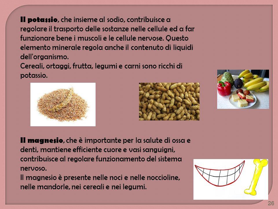 26 Il potassio, che insieme al sodio, contribuisce a regolare il trasporto delle sostanze nelle cellule ed a far funzionare bene i muscoli e le cellul