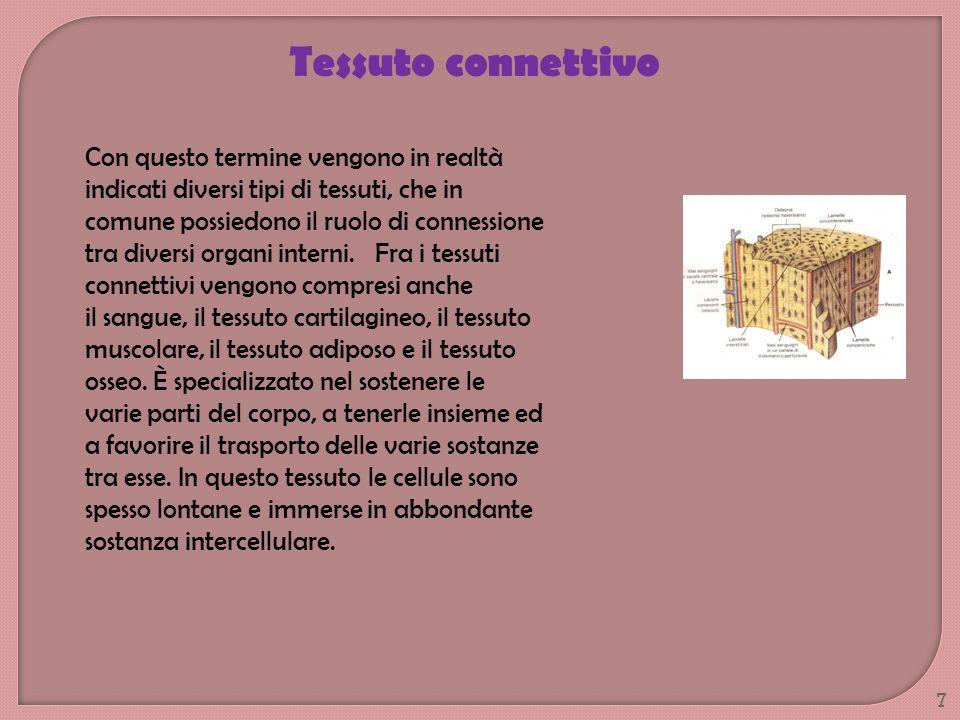 Tessuto connettivo Con questo termine vengono in realtà indicati diversi tipi di tessuti, che in comune possiedono il ruolo di connessione tra diversi