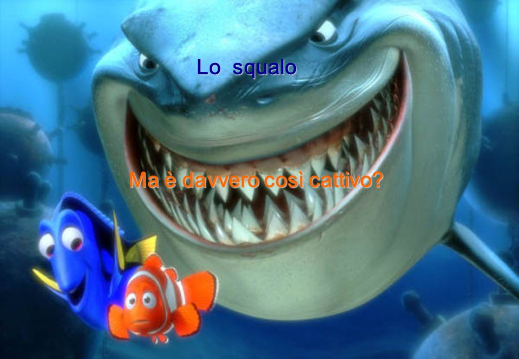 Lo squalo Ma è davvero così cattivo?