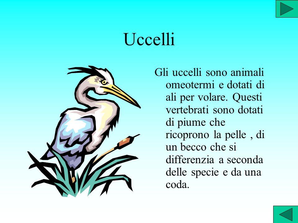 Rettili I rettili sono i primi animali terrestri comparsi sulla terraferma.Questi animali sono dotati di polmoni e camminano muovendo continuamente il corpo.