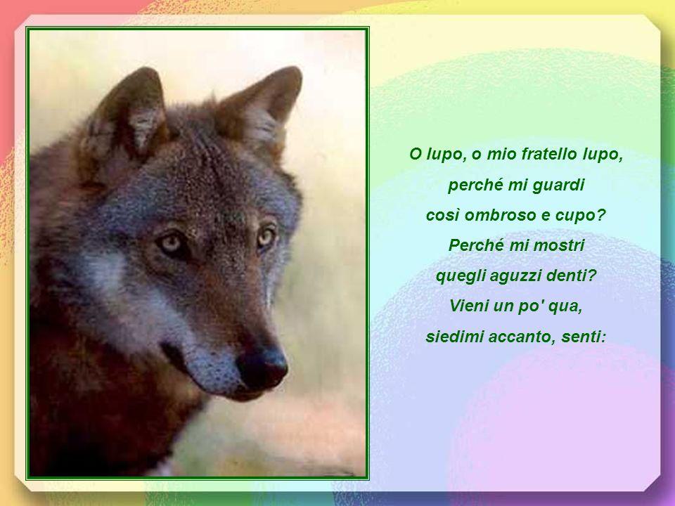 Viveva un dì, narra unantica voce, intorno a Gubbio un lupo assai feroce. Inizia così uno dei racconti ispirati allincontro del Santo poverello con il