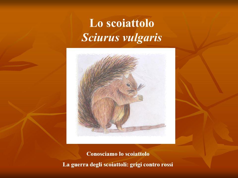 Lo scoiattolo Sciurus vulgaris Conosciamo lo scoiattolo La guerra degli scoiattoli: grigi contro rossi