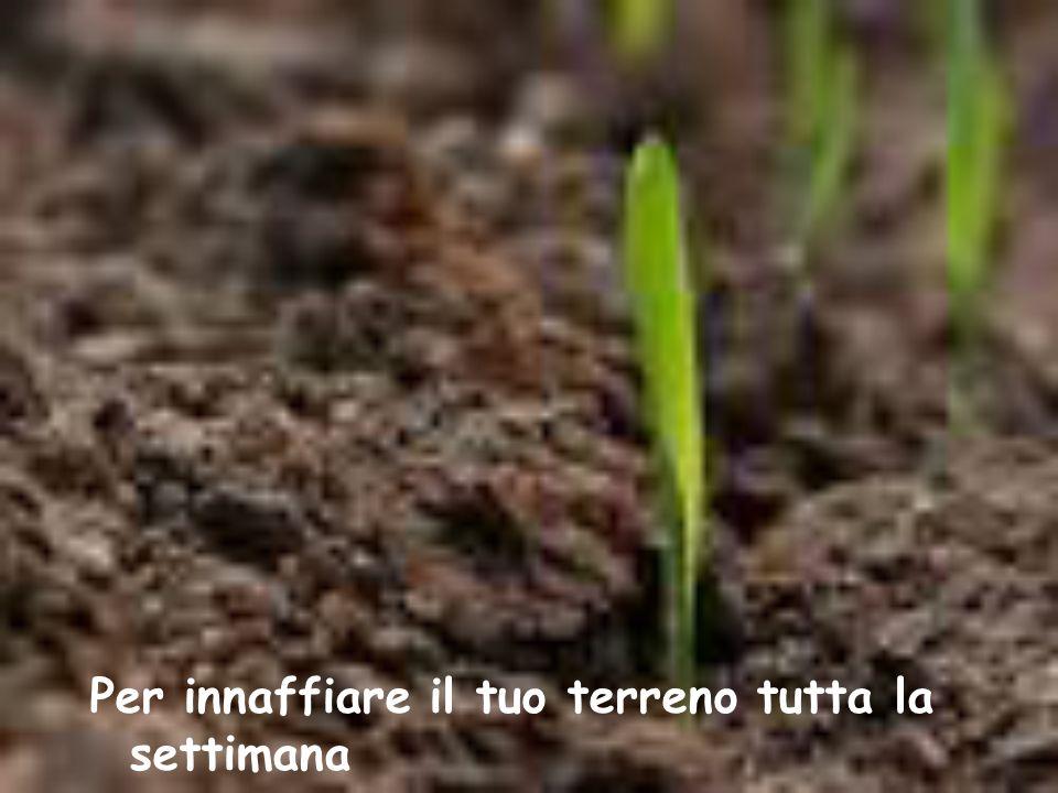 Il tuo giardino bagnato avrai …