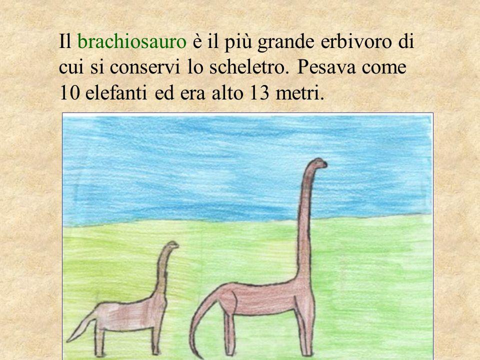 Il tirannosauro era lungo 12 metri e alto 6, era carnivoro e pesava come 10 orsi.