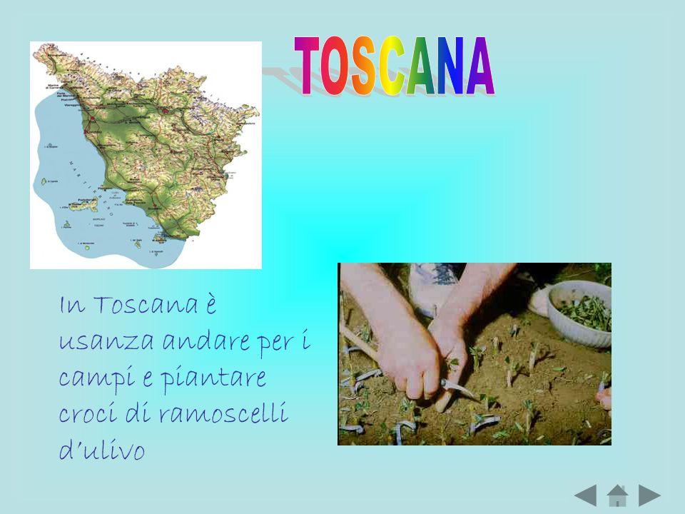 In Toscana è usanza andare per i campi e piantare croci di ramoscelli dulivo