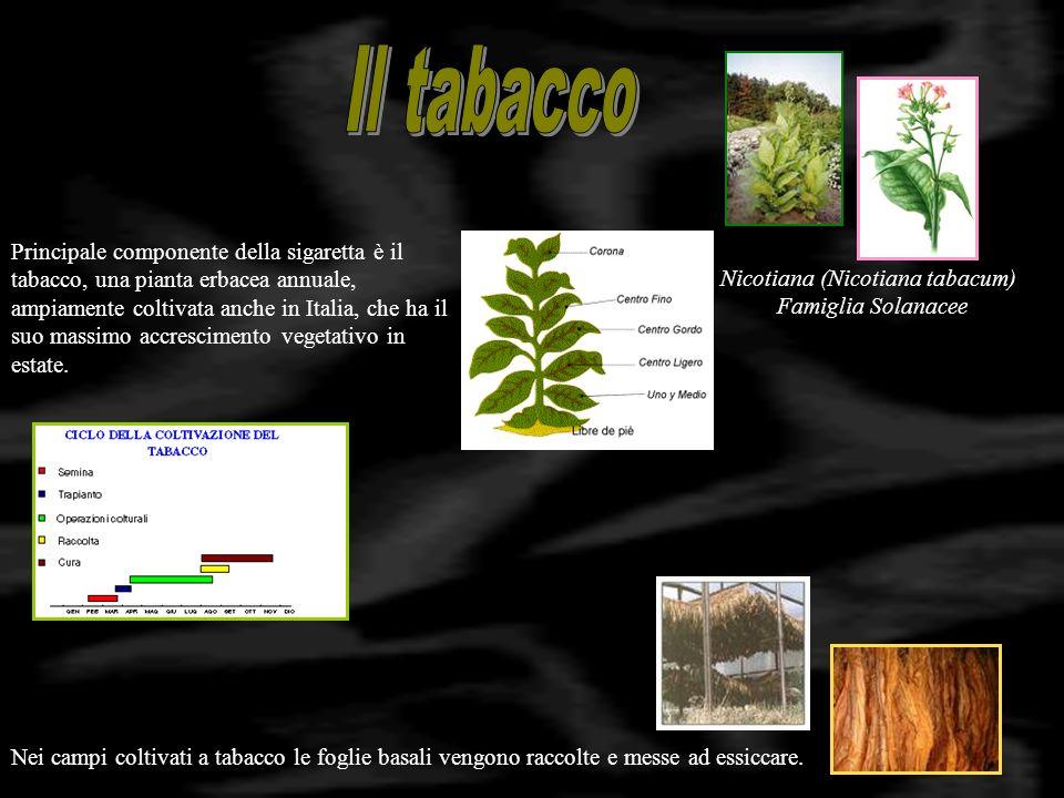 Nicotina 1 mg per ogni sigaretta Catrame Centinaia di sostanze cancerogene Benzirene - Idrocarburi Monossido di carbonio Sostanze irritanti Acidi, Fenoli, Aldeidi Sostanze radioattive Polonio, Radion Il fumo di sigaretta (e generalmente di tabacco), è una miscela di gas (87%), vapori (5%) e particelle solide sospese (8%).