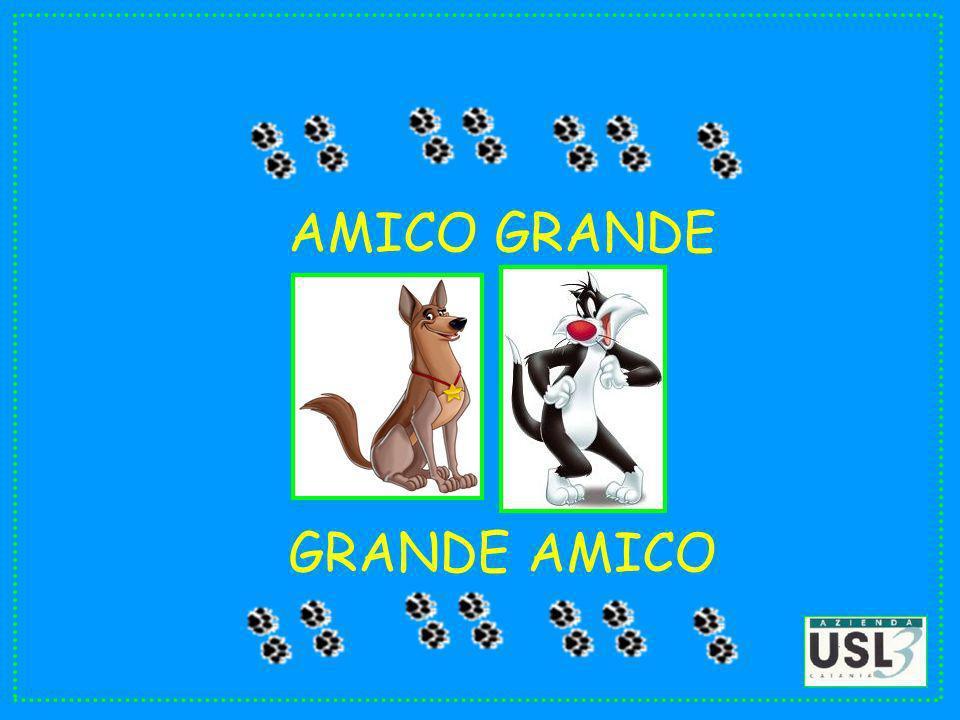 AMICO GRANDE GRANDE AMICO