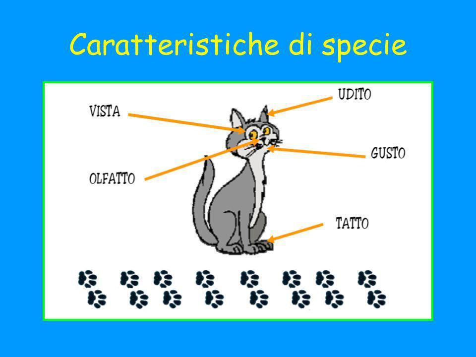 Caratteristiche di specie
