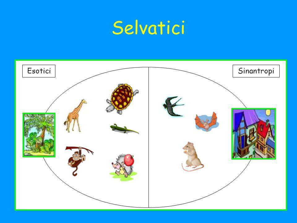 Selvatici Esotici Sinantropi