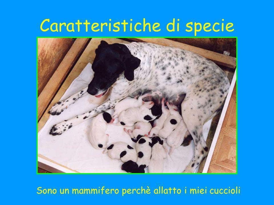 Caratteristiche di specie Sono un mammifero perchè allatto i miei cuccioli