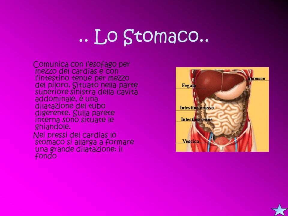 .. Lo Stomaco.. Comunica con lesofago per mezzo del cardias e con lintestino tenue per mezzo del piloro. Situato nella parte superiore sinistra della