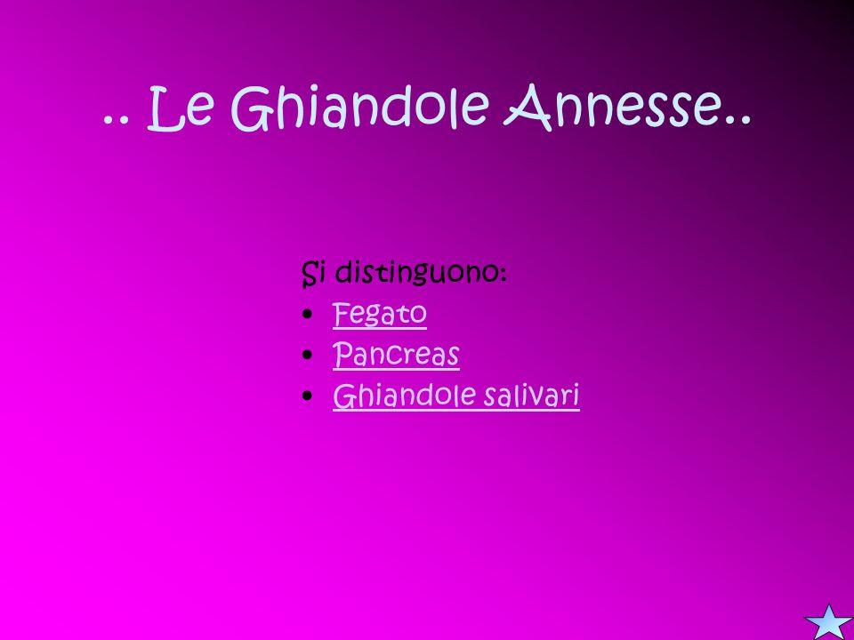 .. Le Ghiandole Annesse.. Si distinguono: Fegato Pancreas Ghiandole salivari