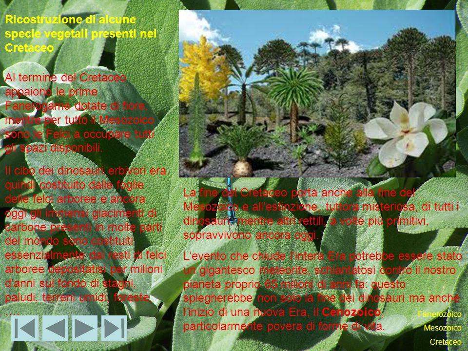 Ricostruzione di alcune specie vegetali presenti nel Cretaceo Al termine del Cretaceo appaiono le prime Fanerogame dotate di fiore, mentre per tutto il Mesozoico sono le Felci a occupare tutti gli spazi disponibili.