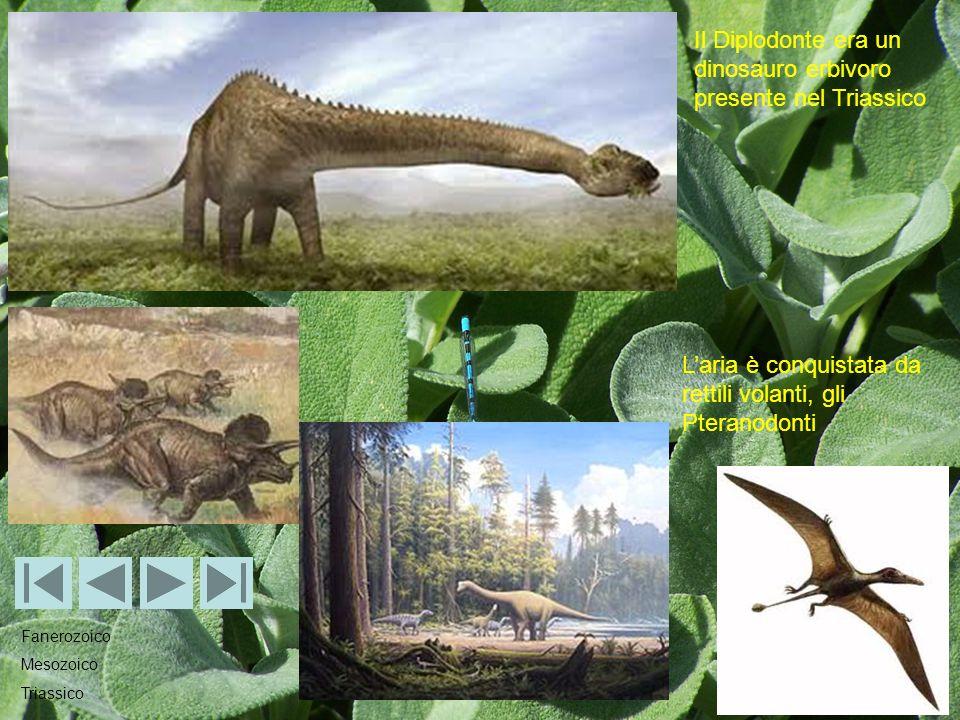 Il Diplodonte era un dinosauro erbivoro presente nel Triassico Laria è conquistata da rettili volanti, gli Pteranodonti Fanerozoico Mesozoico Triassico