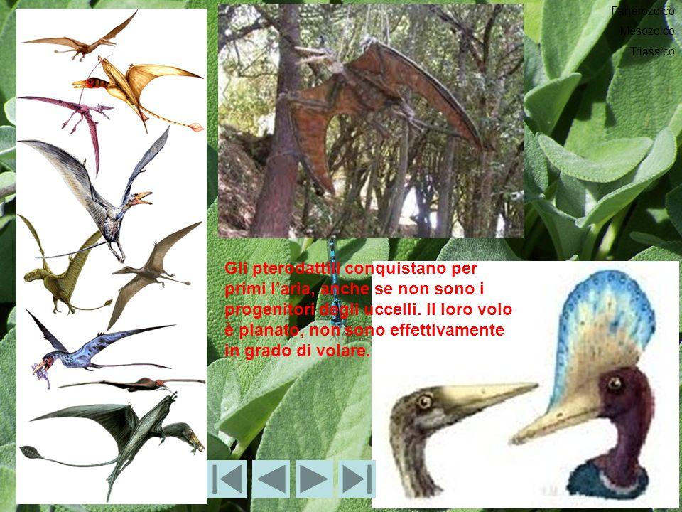 Gli pterodattili conquistano per primi laria, anche se non sono i progenitori degli uccelli.