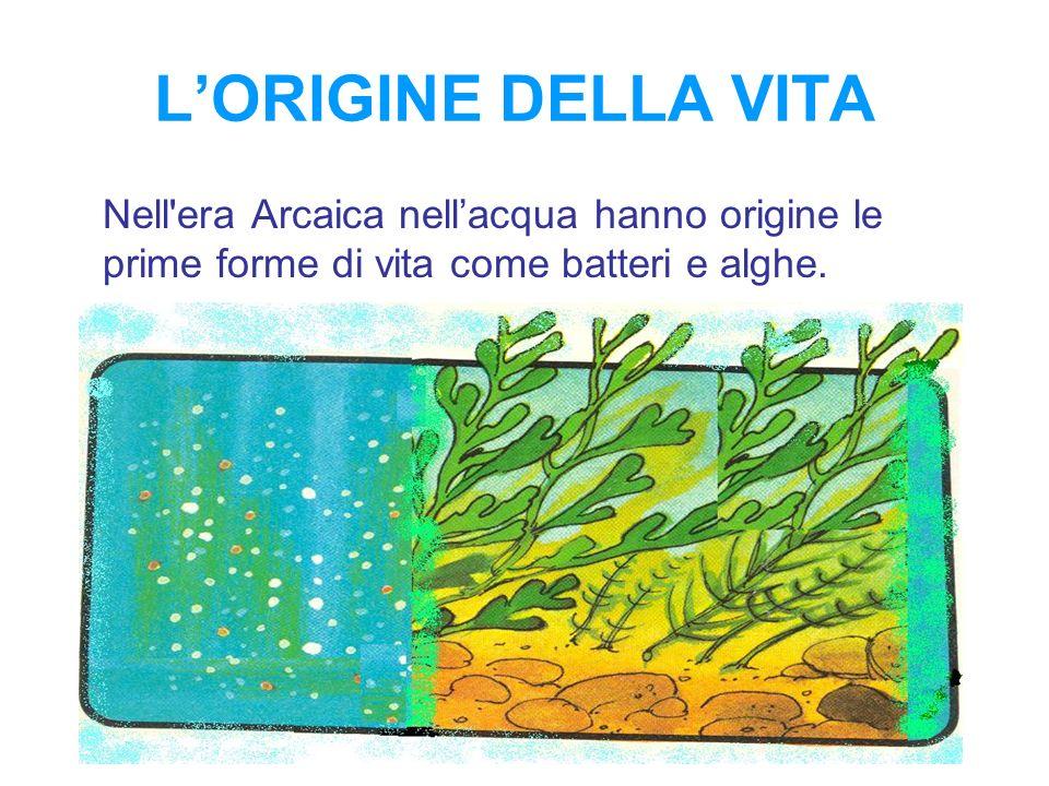 LORIGINE DELLA VITA Nell'era Arcaica nellacqua hanno origine le prime forme di vita come batteri e alghe.