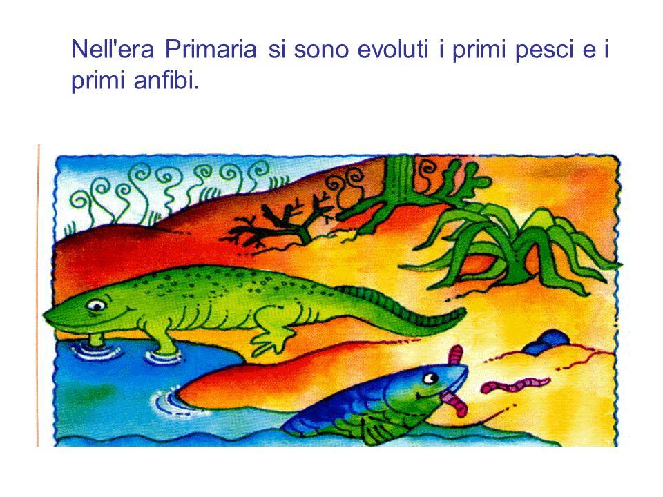 Nell'era Primaria si sono evoluti i primi pesci e i primi anfibi.